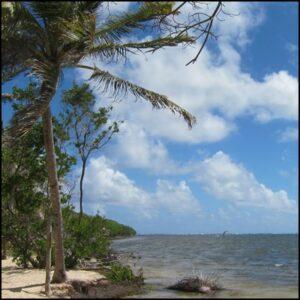 plage cocotier bleu