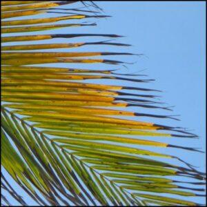 ciel palmier