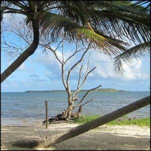 bois flotté mer plage