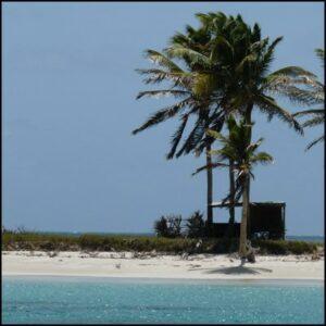 ile palmier