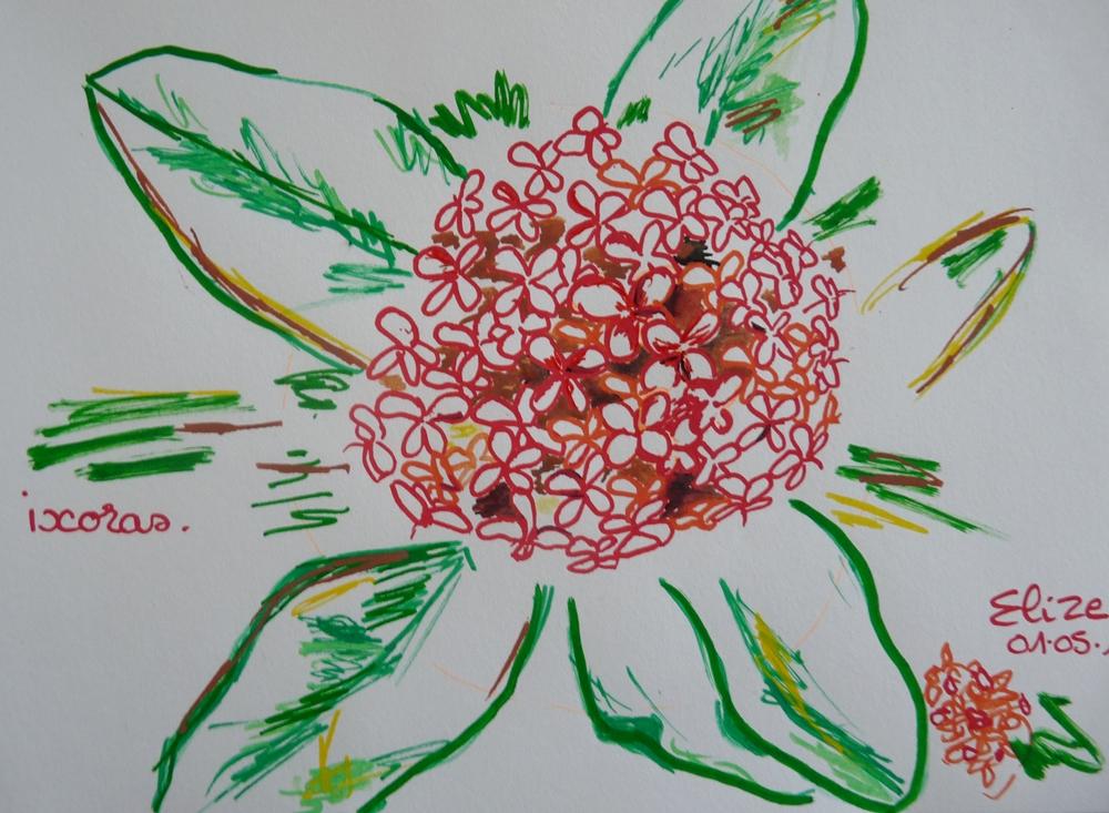 32 Dessins De Fleurs Tropicales à Découvrir Pigmentropie
