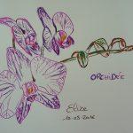 orchidée fleurs tropicales dessin violet