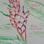 alpinia fleurs tropicales dessin rouge