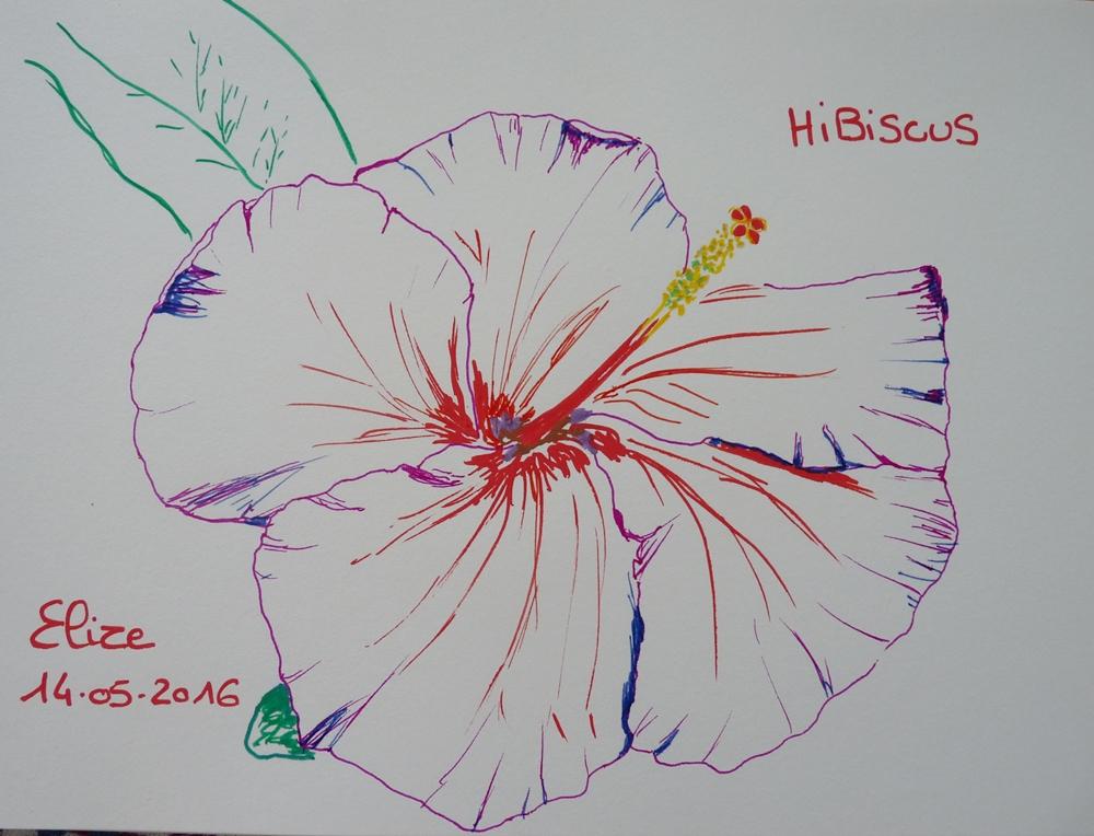 32 Dessins De Fleurs Tropicales A Decouvrir Pigmentropie