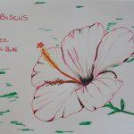 hibiscus fleurs tropicales dessin rouge martinique