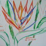 oiseau du paradis dessin fleurs tropicales
