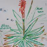 aloe vera fleurs tropicales dessin rouge vert plante