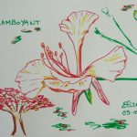 fleur flamboyant fleurs tropicales dessin rouge