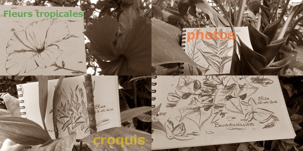 12 fleurs tropicales en photos et dessins