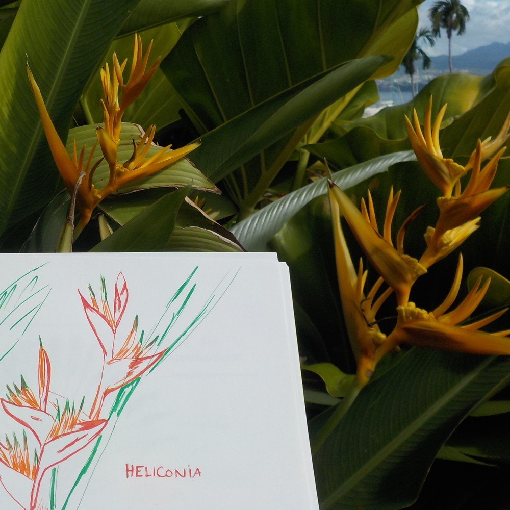 heliconia plante tropicale