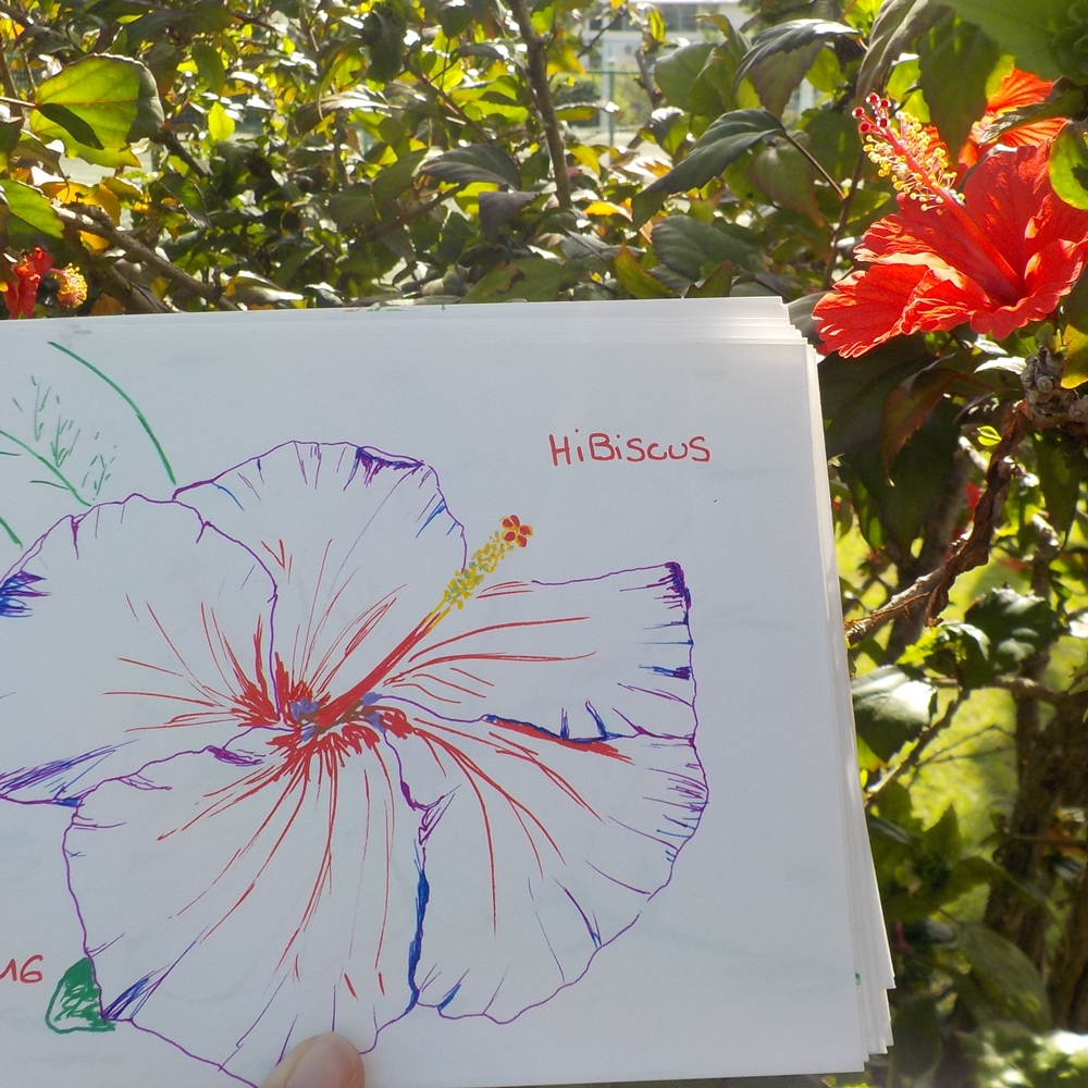 hibiscus fleur dessin