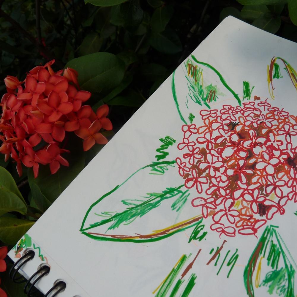 ixoras buisson fleur rouge tropique