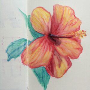 hibiscus dessins aquarelle