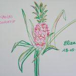 ananas panache decoratif fleurs tropicales dessin rose