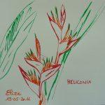 fleurs tropicales dessin rouge heliconia orange
