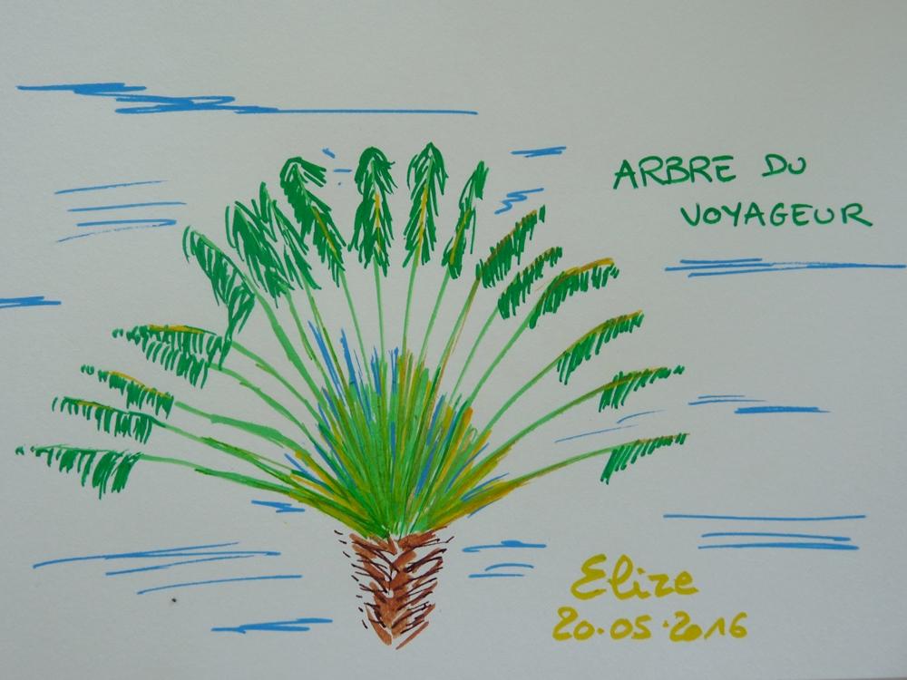 32 dessins de fleurs tropicales d couvrir pigmentropie - Voyageur dessin ...