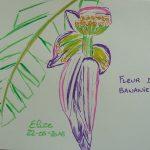 fleur de bananier fleurs tropicales dessin violet