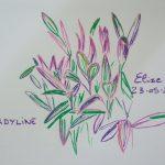 cordyline fleurs tropicales dessin plante