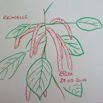 ricinelle fleurs tropicales dessin rouge queue de chat