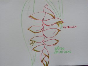 heliconia fleurs tropicales dessin rouge suspendu