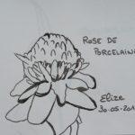 rose de porcelaine dessin fleur