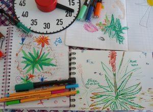 dessin aloe verra enfant feutre chronometre défi