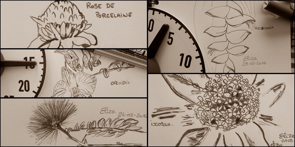 32 dessins de fleurs tropicales à découvrir