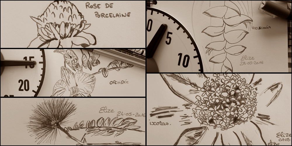 dessin dessiner fleur tropicale
