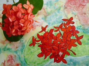 ixoras fleur tropicale