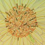 héliotropisme fleur tournesol jaune soleil