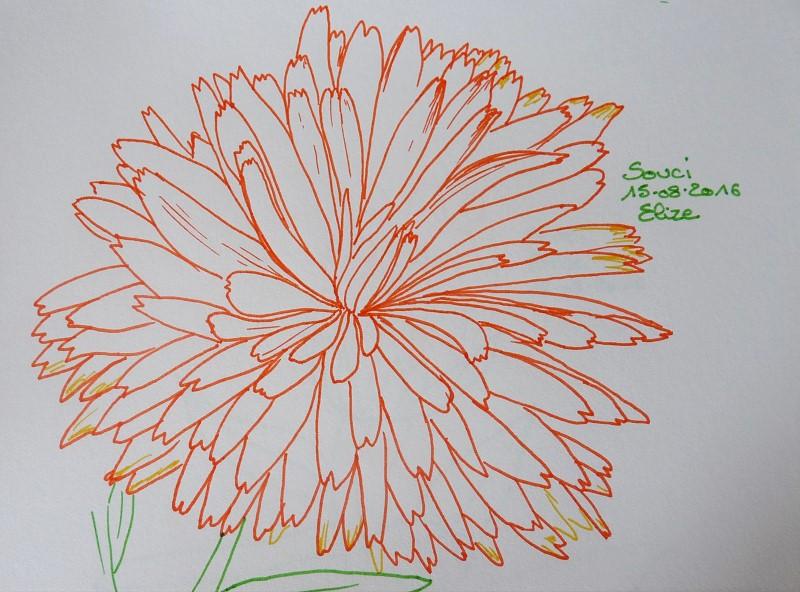 fleur de souci orange, dessin