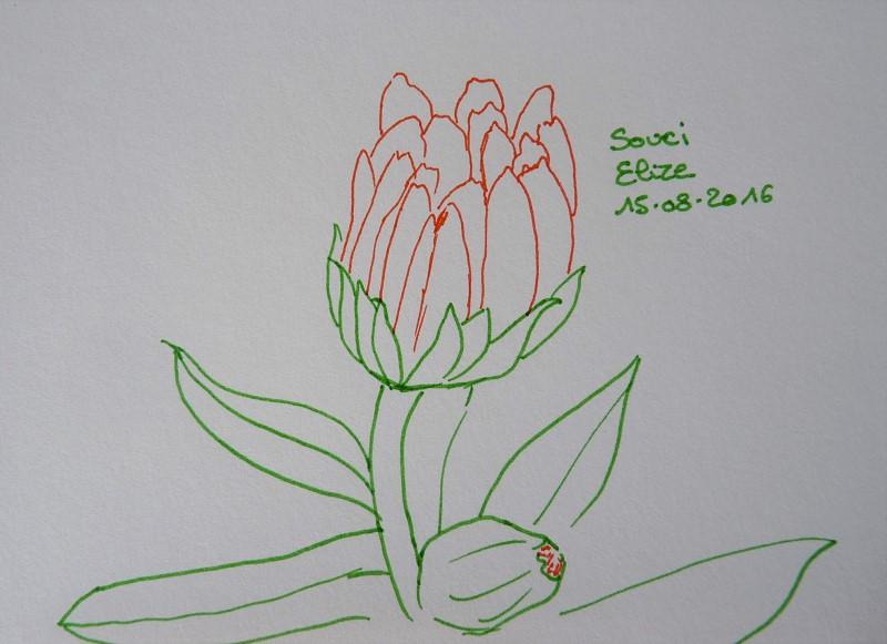 bouton de fleur de souci, dessin au feutres