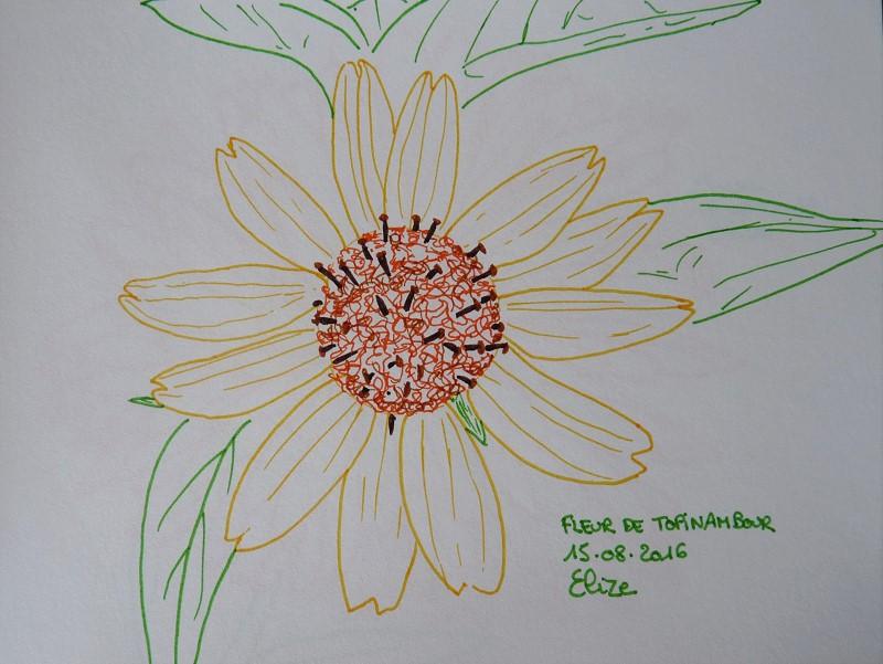 fleur de topinambour, dessin aux feutres