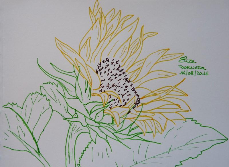 fleur de tournesol, dessin au feutre