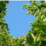 baniere ciel et arbres