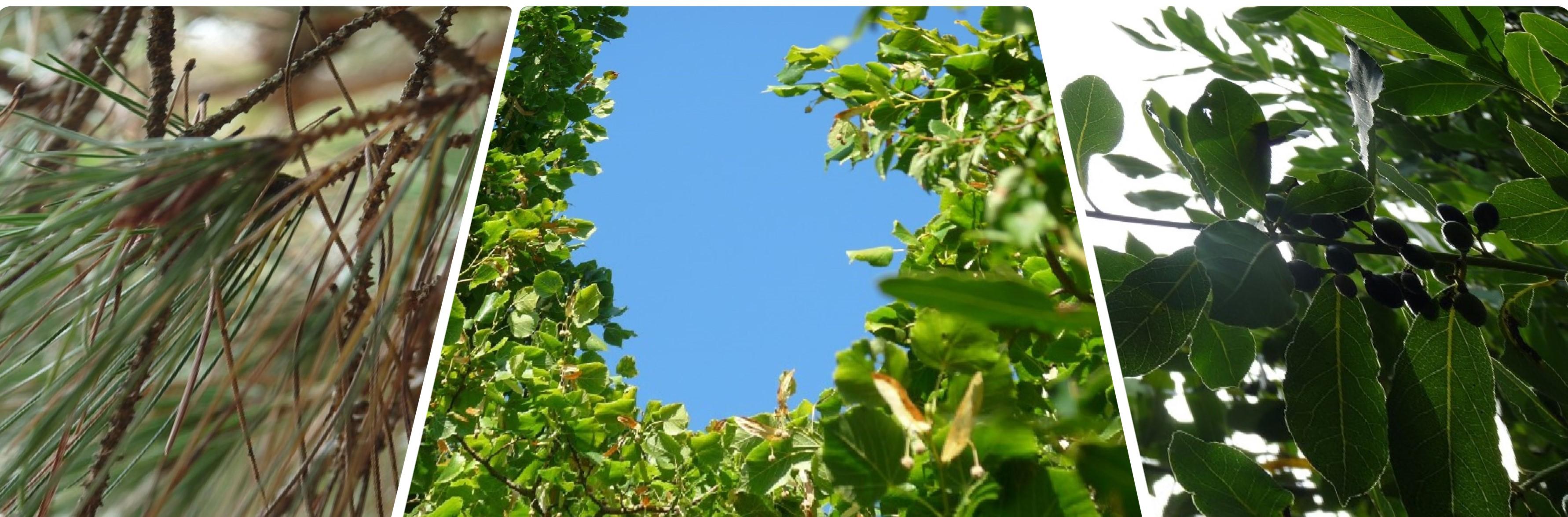 Ciel et arbres : Inspirations en 11 photos - PiGMENTROPiE