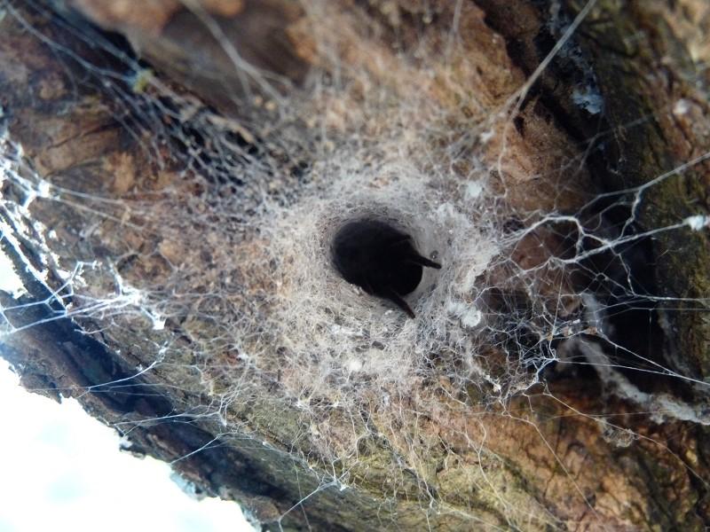 araignée patte trou toile