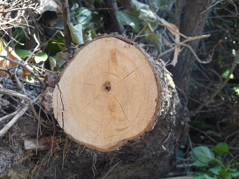 tronc cercle noeud bois