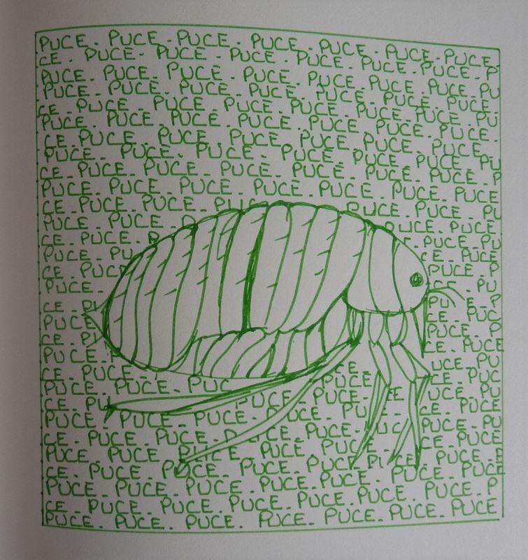 puce dessin au feutre vert elize