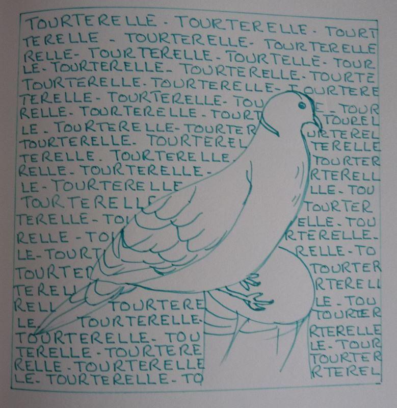 tourterelle dessin au feutre gris elize série 'diminutifs amoureux'